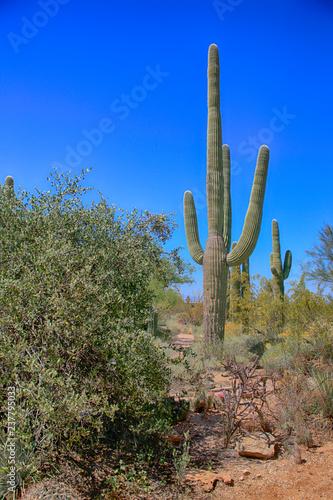 Papiers peints Cactus The Saguaro East Rincon Mountain National Park in Tucson, Arizona