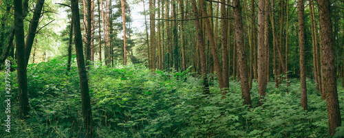 Staande foto Oost Europa Panorama Of Summer Mixed Forest In Eastern Europe. Panoramic Vie