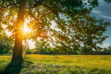 Beautiful Sunset Sunrise Sun Shining Through Oak Tree Branches
