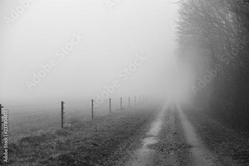 Fotografie, Obraz  Grusväg mellan åker och lövskog i tät dimma