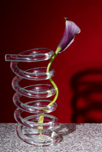 Close Up Of Flower In Vase