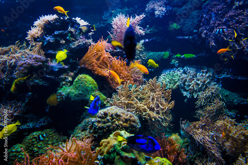 Poster Coral reefs Aquarium. Underwater life landscape