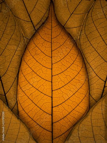 Obraz na płótnie Autumn Leaves