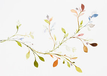 Picture Water Colour, Hand Draw, Leaves, Branches, Ivy.