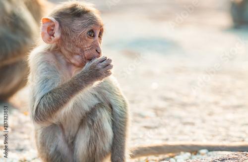 In de dag Baby monkey is eating among other monkeys