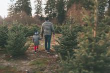 A Father And Son Walking Through A Tree Farm.