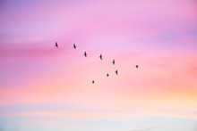 Migratory Birds Flying In The ...