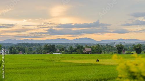 Fototapety, obrazy: landscape with green field