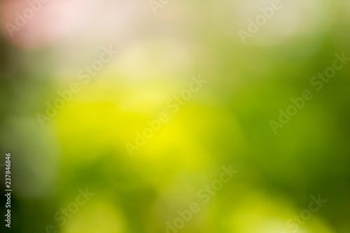 Recess Fitting Narcissus Blur Image of Green light bokeh nature background