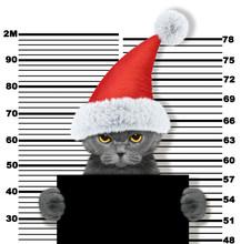 Cute Cat As Santa Claus In Pri...