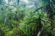tropischer Regenwald bei Gods Window in Südafrika