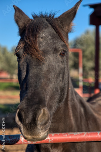 Photo  The head and part of the body of a brown horse with a long forelock holding its