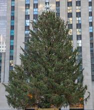 Christmas Tree In Manhattan. R...