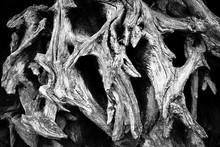 Ancient Oak Roots