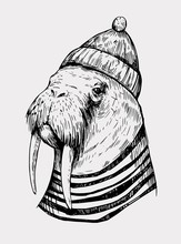 Sketch Of A Walrus In A Cap An...
