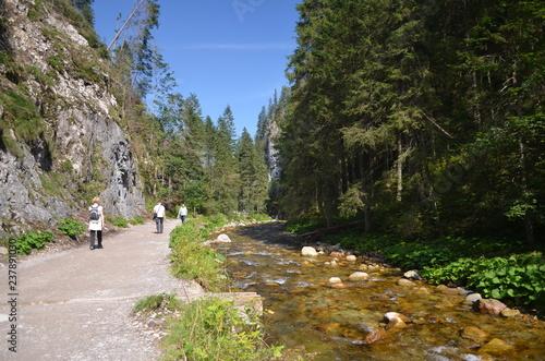 Obraz Dolina Kościeliska - środek szlaku latem, Tatry - fototapety do salonu