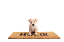 Cute Little Puppy Standing On A Door Mat With Written Text Home