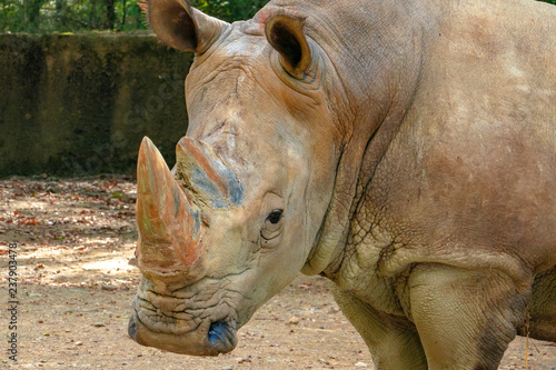 Fényképezés  Saw this Rhinoceros while visiting the famous Kruger National Park in South Africa