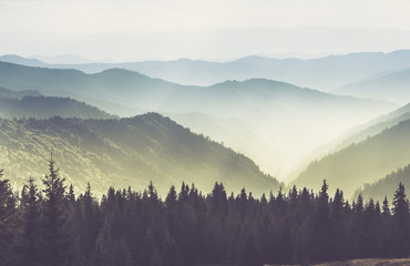 Fototapeta Popularne Majestic landscape of summer mountains. A view of the misty slopes of the mountains in the distance. Morning misty coniferous forest hills in fog and rays of sunlight.Travel background.