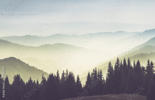 Fototapeta Majestic landscape of summer mountains. A view of the misty slopes of the mountains in the distance. Morning misty coniferous forest hills in fog and rays of sunlight.Travel background.  obraz na płótnie