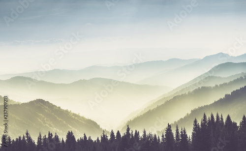Poster Heuvel Majestic landscape of summer mountains. A view of the misty slopes of the mountains in the distance. Morning misty coniferous forest hills in fog and rays of sunlight.Travel background.