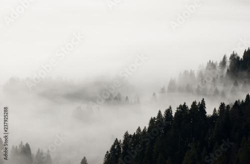 Poster Morning with fog schwarzer Wald, Schwarzwald