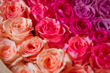 Beautiful Pink And Red Roses W...