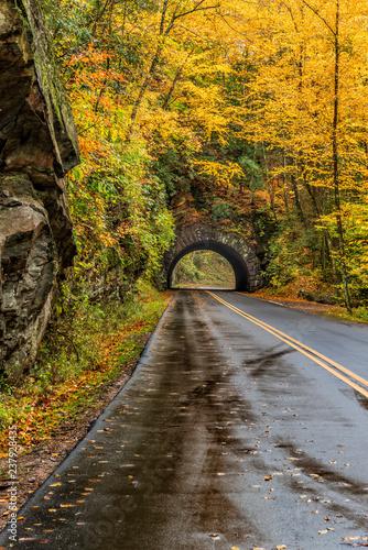 Fotografie, Obraz  Smoky Mountain Tunnel in Autumn Vertical