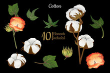 Hand Drawn Cotton Bolls, Flowers And Leaves Set On Black Background, Clip Art, Scrabooking Graphics