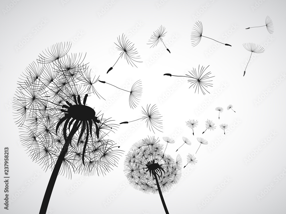 Fototapety, obrazy: Abstract black dandelion, dandelion with flying seeds - for stock vector