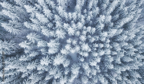 Obraz Aerial view at the winter forest. Pine trees as a background. Winter landscape from air. Natural forest background. Forest background from drone - fototapety do salonu