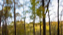 Impressionist Forest Banner