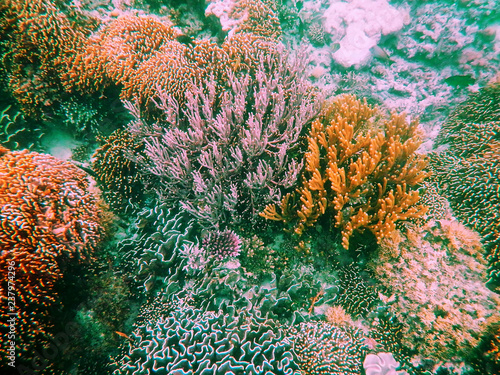 Spoed Foto op Canvas Onder water Coral reef in Komodo National Park, Flores Sea, Nusa Tenggara, Indonesia.