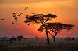 Leinwandbild Motiv Amazing sunrise in Serengeti natural park of Tanzania filling good in the morning