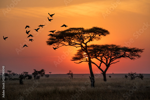 Poster Afrique Amazing sunrise in Serengeti natural park of Tanzania filling good in the morning