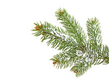 Christmas Tree Branch With Snow, White Background.