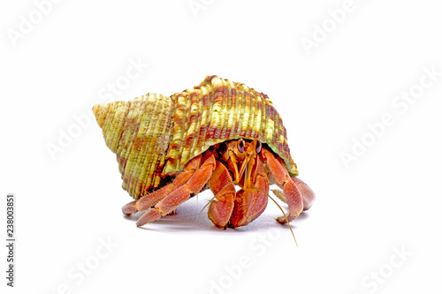Hermit crabs isolated on white background with selective focus Fototapet