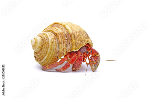 Leinwand Poster Hermit crabs isolated on white background with selective focus
