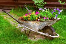 Old Rusty Wheelbarrow Flowerbe...
