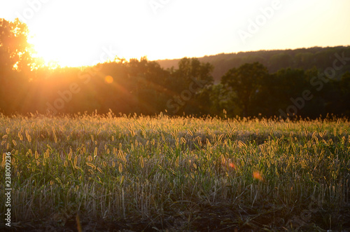 Field landscape during sunset after burning last year's grass Canvas Print