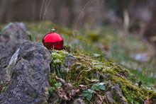Einsam In Der Wildnis Im Wald Ausgesetzte Rote Christbaumkugel Zaubert Weihnachten In Die Natur