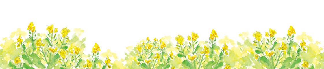 菜の花の道