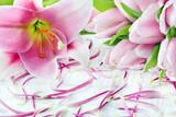 Fototapeta Fototapeta w kwiaty na ścianę - Tulpen und Lilien