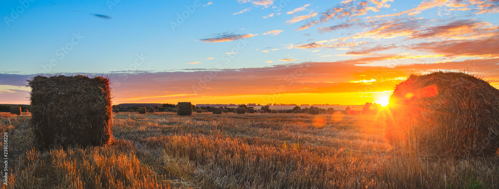 Fototapeta Panoramic view of hay bales on the field after harvesting illuminated by the last rays of setting sun