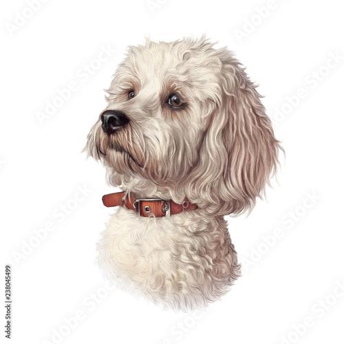 portret-maltanski-pies-odizolowywajacy