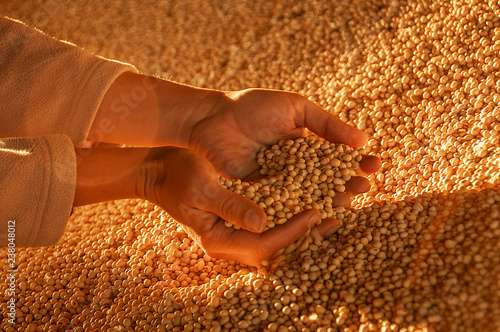 Fototapeta Human hands with soy seeds. obraz