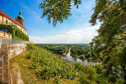Vászonkép Vineyard in front of the castle Mělník Bohemia Czech Republic