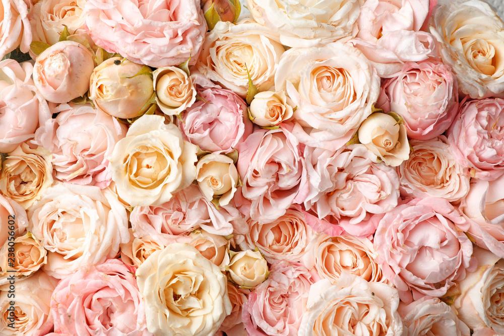 Obraz Many beautiful roses as background, top view fototapeta, plakat