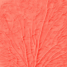Living Coral Color Of The Year 2019. Background With Coral In Trendy Color