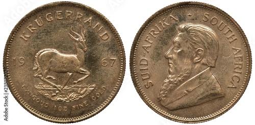 Fotografia  South African Republic golden coin 1 one kugerrand 1967, springbok right divides